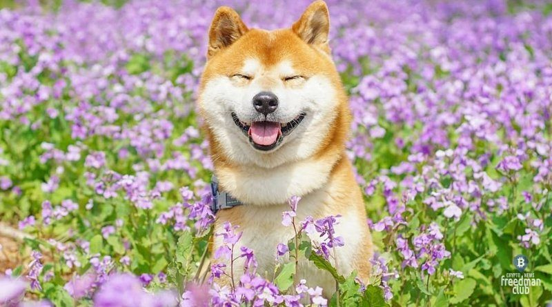 Dogecoin-DOGE-probil-rekordnyj-maksimum-vyshe-$0,7