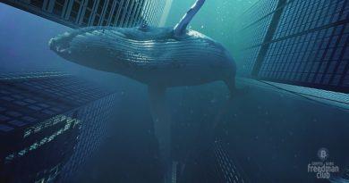 kity-nacopili-okolo-60-000-btc-za-odin-den