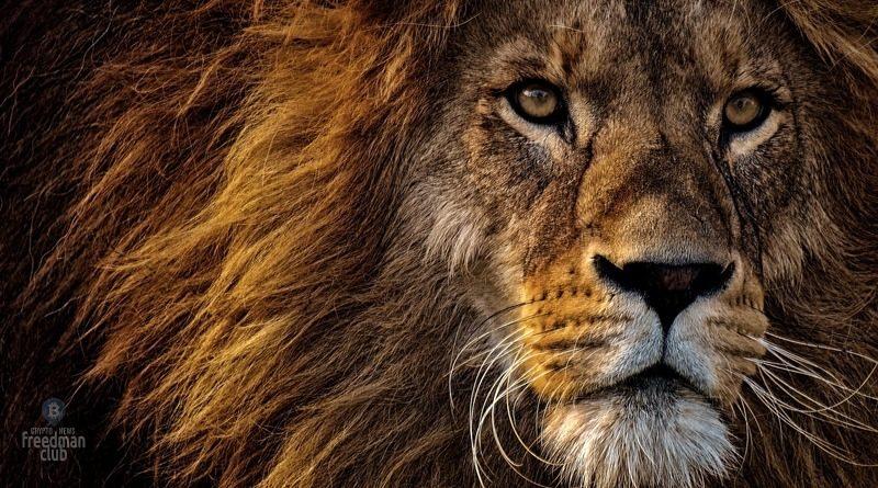 afrika-lidiruet-po-rostu-obemov-odnorangovoj-torgovli-bitcoin