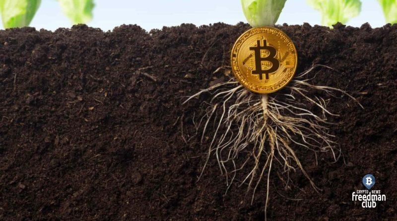 obnovleniye-bitcoin-taproot-zapuscheno-v-testovoy-seti